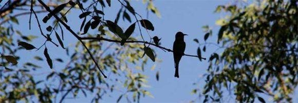 Bird-Watching trip