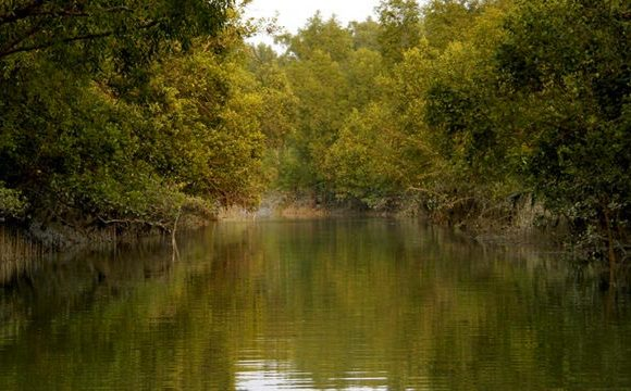 Best time to visit the Sundarbans