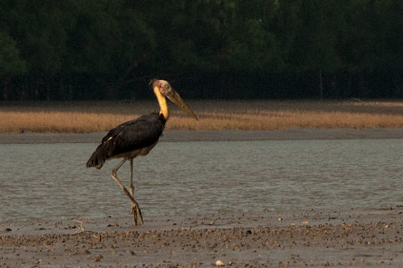 ad-stork