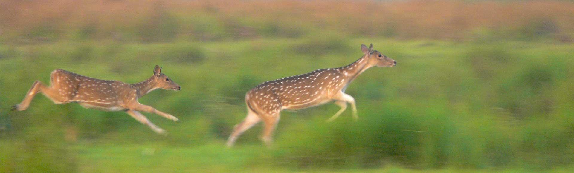 deer-banner-slim